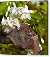 Autumnleaf Butterfly Canvas Print