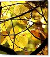 Autumn's Revelry Canvas Print