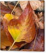 Autumns Color Palette Canvas Print