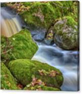 Autumn's Creek 2 Canvas Print