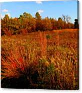 Autumns Field Canvas Print