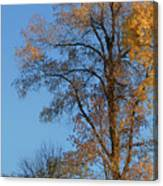 Autumn's Gold  - No 2 Canvas Print