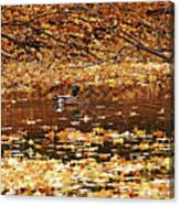 Autumns Mallards Canvas Print