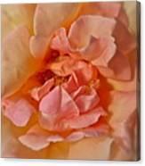 Autumns Rose Canvas Print