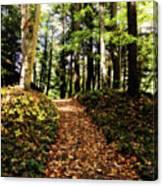 Autumn's Trail Canvas Print