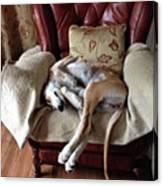 Ava - Asleep On Her Favourite Chair Canvas Print
