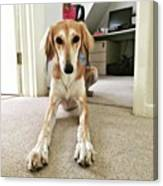 Ava On Her First Birthday #saluki Canvas Print