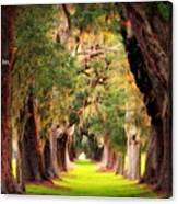 Avenue Of Oaks 2 I Am The Way Canvas Print