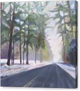 Avenue Of The Pines-winter Canvas Print