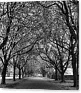 Avenue Of Trees Monochrome Canvas Print