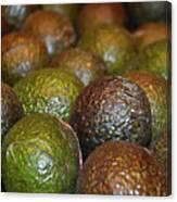 Avocados Canvas Print