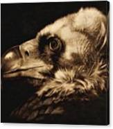 Avvoltoio Canvas Print