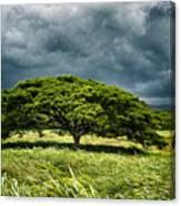 Awaiting The Rain Canvas Print
