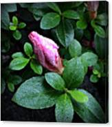 Awakening - Flower Bud In The Rain Canvas Print