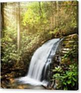 Awakening In The Forest Canvas Print