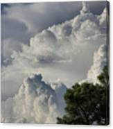 Awesome Cloulds And A Pine Tree Canvas Print