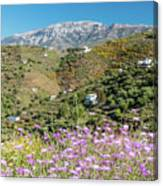 Axarquia In Spring Canvas Print