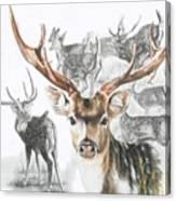 Axis Deer Canvas Print