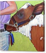 Ayrshire Show Heifer Canvas Print