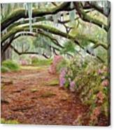 Azalea Alley Canvas Print