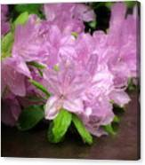 Azalea Bouqet Canvas Print
