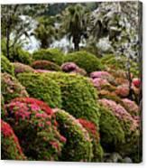 Azalea Bush Garden Canvas Print