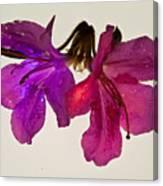 Azalea Doublet Canvas Print