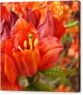 Azalea Flowers Art Prints Azaleas Gilcee Art Prints Baslee Troutman Canvas Print