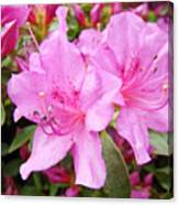 Azalea Garden Art Prints Pink Azaleas Flowers Baslee Troutman Canvas Print