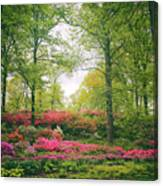 Azalea Hillside Canvas Print