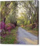 Azalea Lane By H H Photography Of Florida Canvas Print