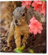 Azalea Squirrel Canvas Print