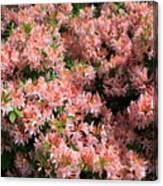Azalea Wall Canvas Print