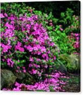 Azalea Waterfall At The Azalea Festival Canvas Print