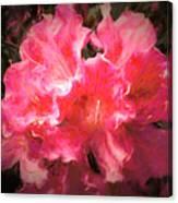 Azaleas 10 Canvas Print