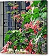 Azaleas At The Window   Canvas Print