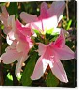 Azalea's In Bloom Canvas Print