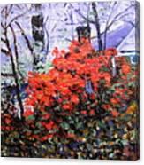Azaleas In Georgia Canvas Print