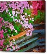 Azaleas Over The Fence Canvas Print