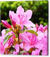 Azaleas Pink Azalea Flowers Artwork 12 Landscape Art Prints Canvas Print