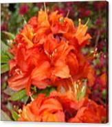 Azaleas Rhodies Art Prints Azalea Flowers Giclee Baslee Troutman Canvas Print