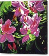 Azaleas With Dew Drop Canvas Print