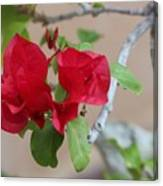 Aztec Bougainvillea  Canvas Print