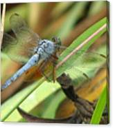 Azure Dragonfly 1 Canvas Print