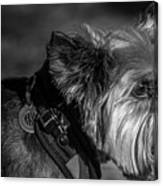 B And W Dog Canvas Print