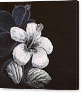 B And W Hibiscus Canvas Print