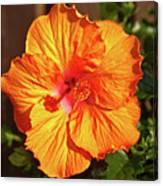 B Glavin Garden 11604 Canvas Print