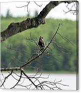 Kejimkujik National Park - Bird Canvas Print