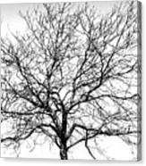 B/w Tree #1 Canvas Print