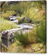 Babbeln Brook Canvas Print